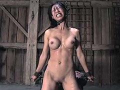Torture of bird