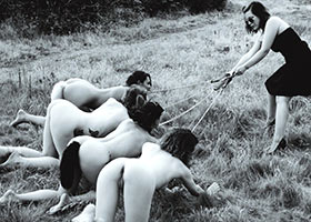 Group training of pets at slave school