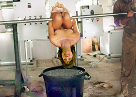 Boiling of human dish in a meat factory