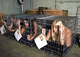 Slaves for sale special trained in the slave school